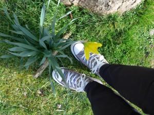 Daffodil, Bletchley Park